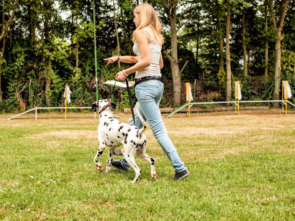 """""""Spiel ohne Grenzen"""" – über Menschen und Hunde"""